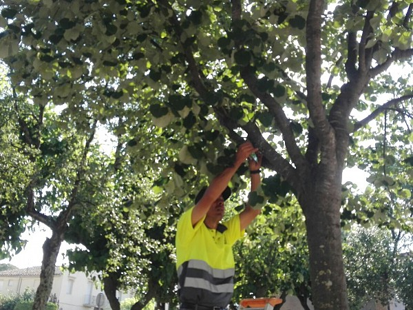 Biological treatment for combating blight a hundred trees Cassa
